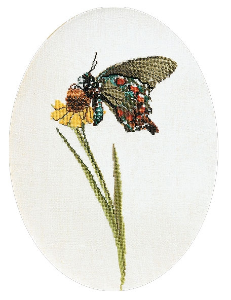 Butterfly brown-green