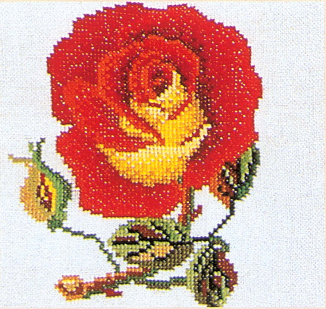 Rose Red-Yellow
